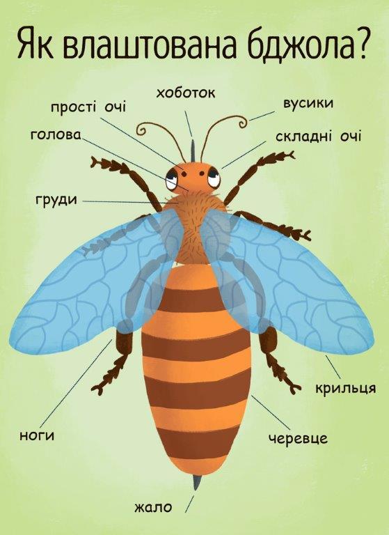 книга Як утворюється мед?