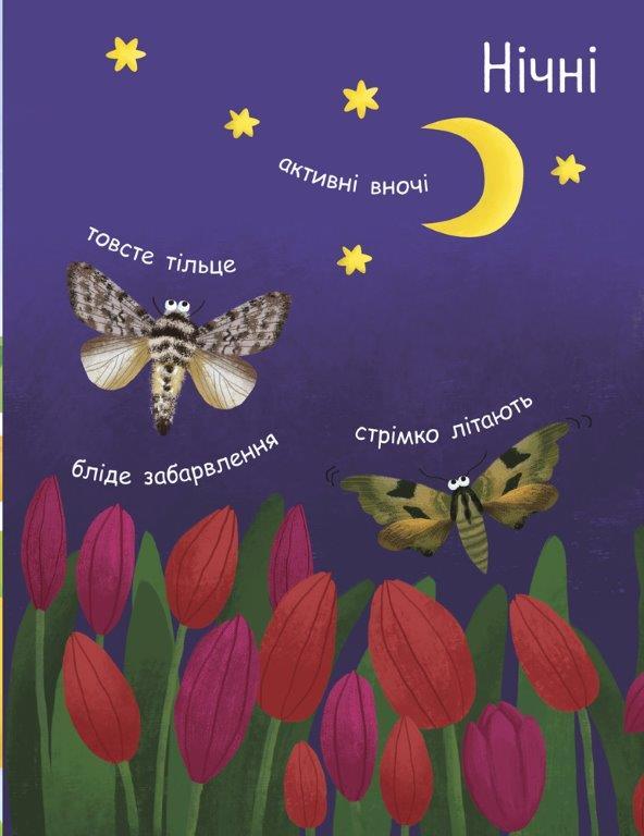 Як народжується метелик?