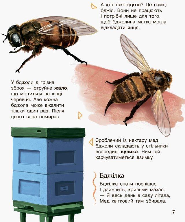 Енциклопедія дошкільника Комахи Ранок