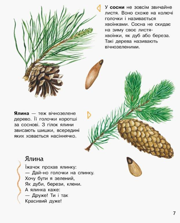 Енциклопедія дошкільника Ліс