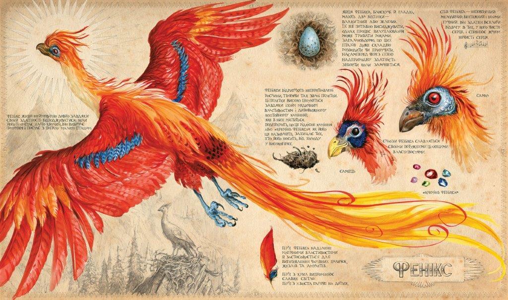 Книга Гаррі Поттер і таємна кімната Подарункове