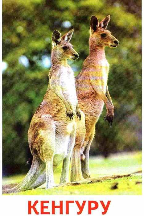 Тварини різних широт