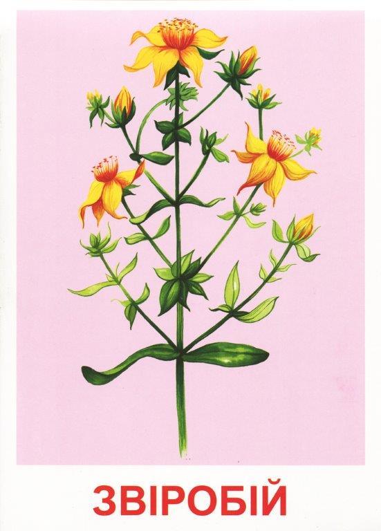 Розповімо дітям Про лікарські рослини 16 карток